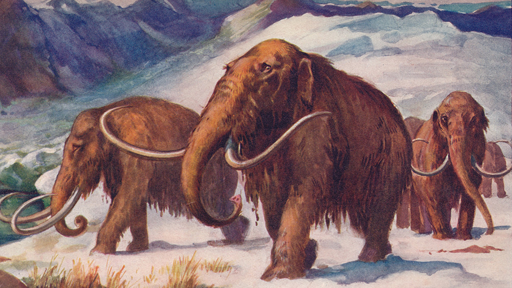 Scientists 'two years away' from creating woolly mammoth hybrid