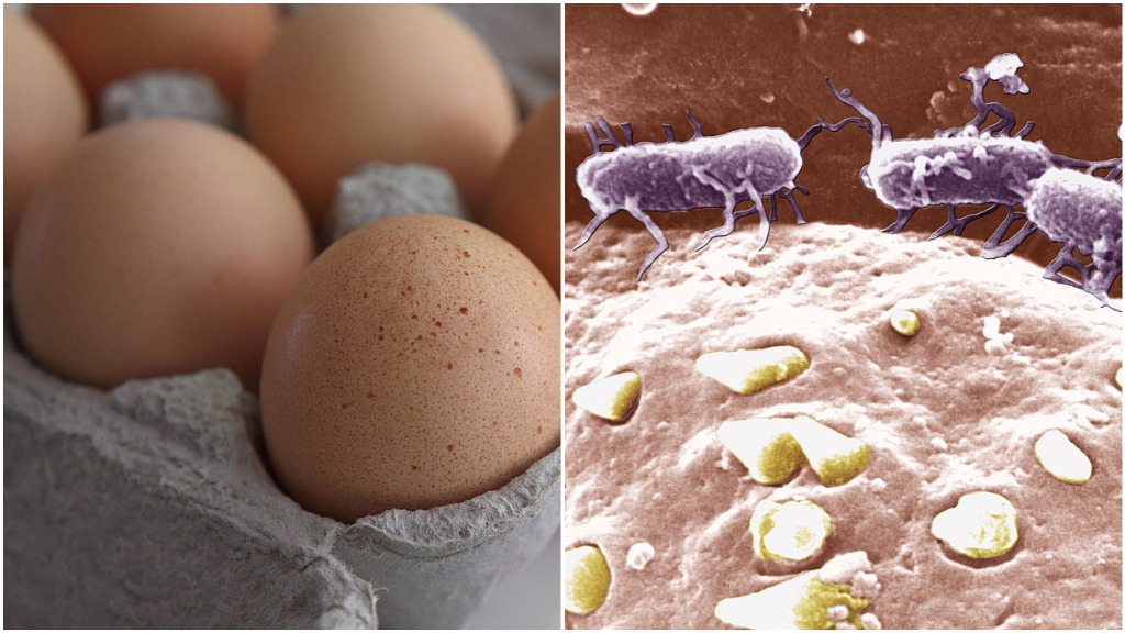 Salmonella bug could be used to fight cancer, researchers say