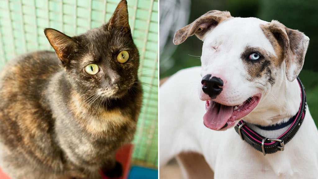 RSPCA NSW drops all pet adoption fees to $29 for three days