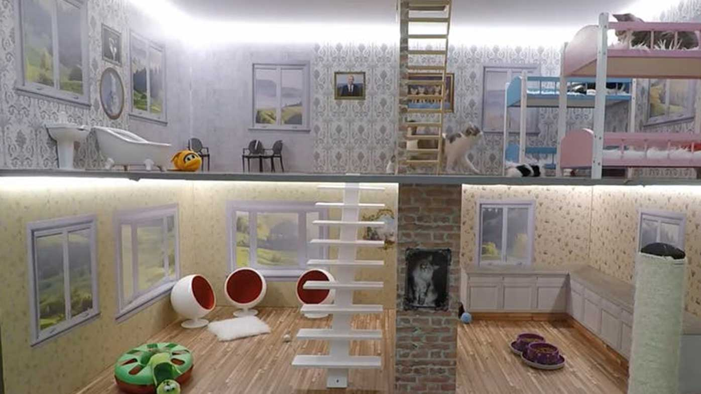 There's a 24-hour livestream of cats playing in a dollhouse on cat travel, cat yoga, cat room designs, cat remodeling, cat movies, cat garden, cat tattoo designs, cat photography, cat style, cat fashion, cat humor, cat restaurants, cat wall decoration, cat genealogy, cat health, cat floor plans, cat diy, cat paint, cat insurance, cat fur designs,