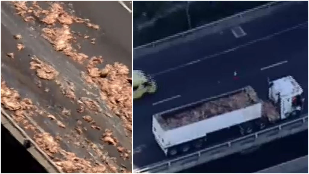 Offal has spilled from a truck on Melbourne's West Gate Freeway. (9NEWS)