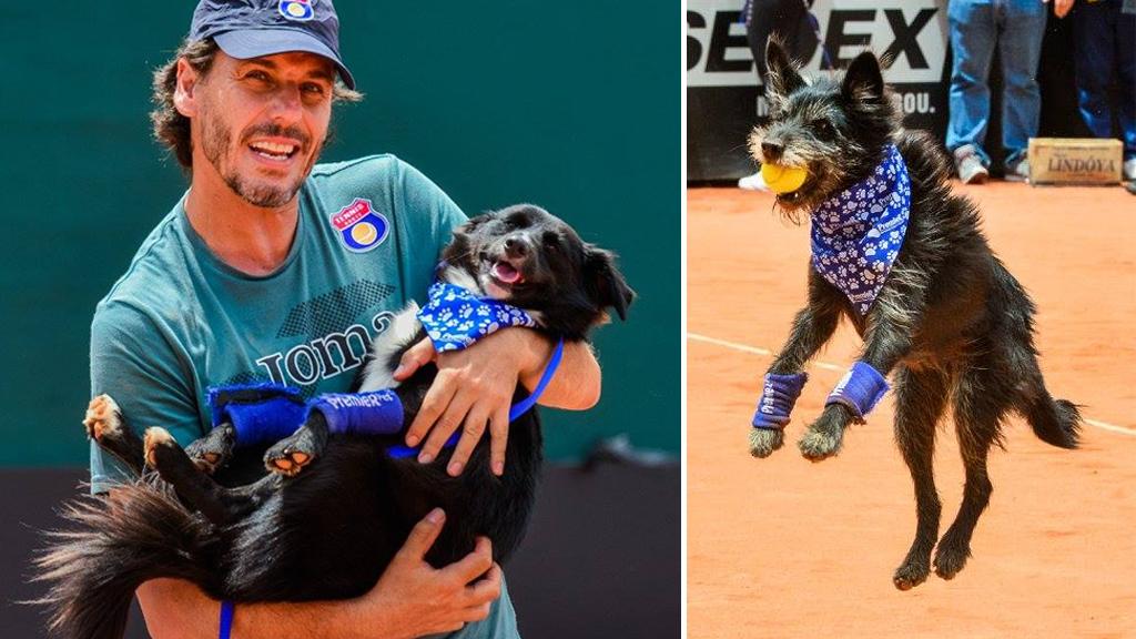 Good boys: Shelter dogs retrieve tennis balls at Brazil Open
