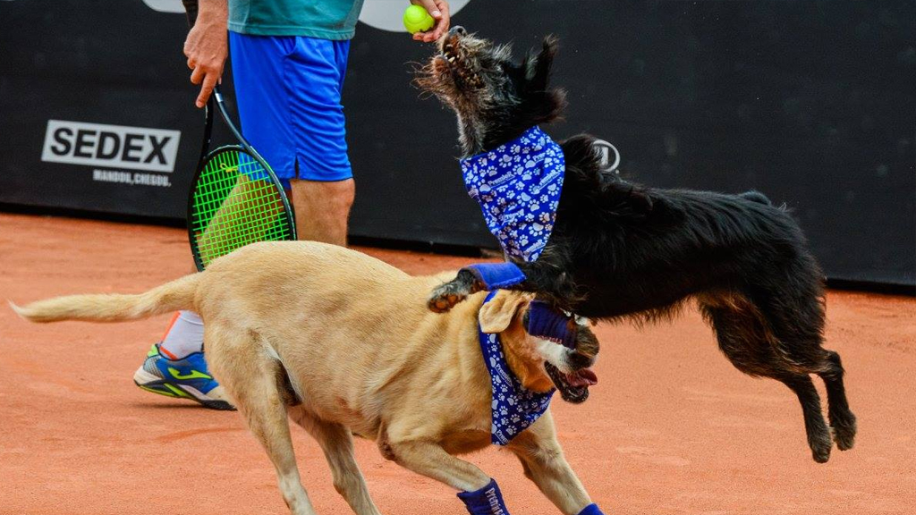 All six dogs were available for adoption. (Facebook / Brazil Open de Tenis))