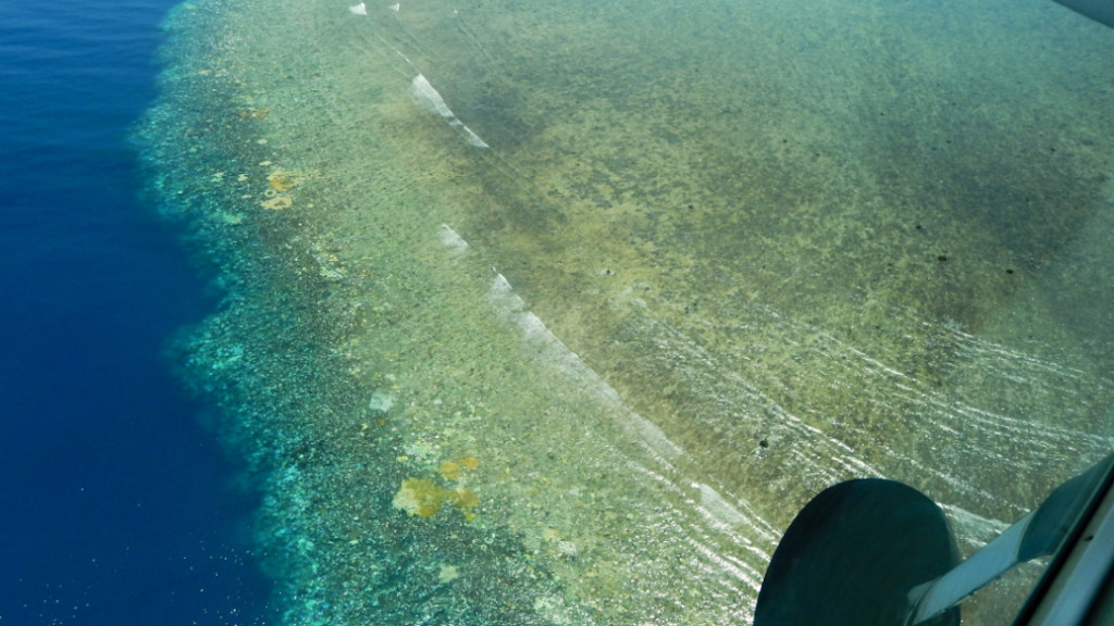 "The historic bleaching has thrust the beloved Barrier Reef into ""uncharted territory."" (Supplied)"