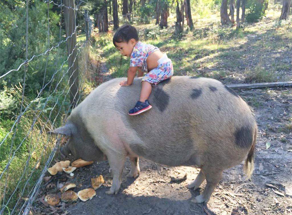 Melbourne toddler's special bond with pet pig captured in photo