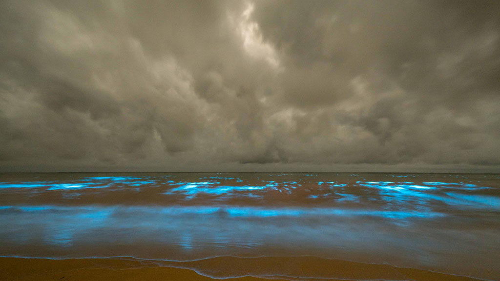 The bright blue lights at Preservation Bay were caused by bioluminescent algae. (Chatwin Photography)