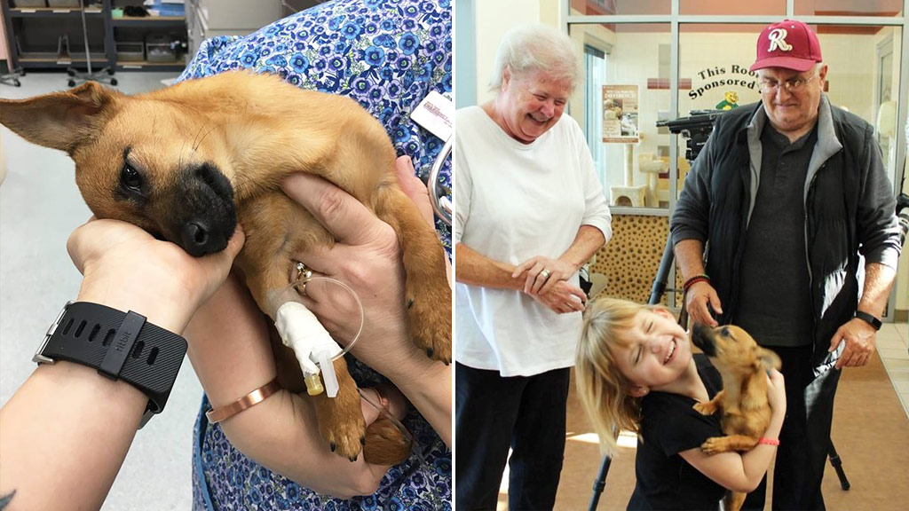 Puppy who overdosed on heroin finds new home