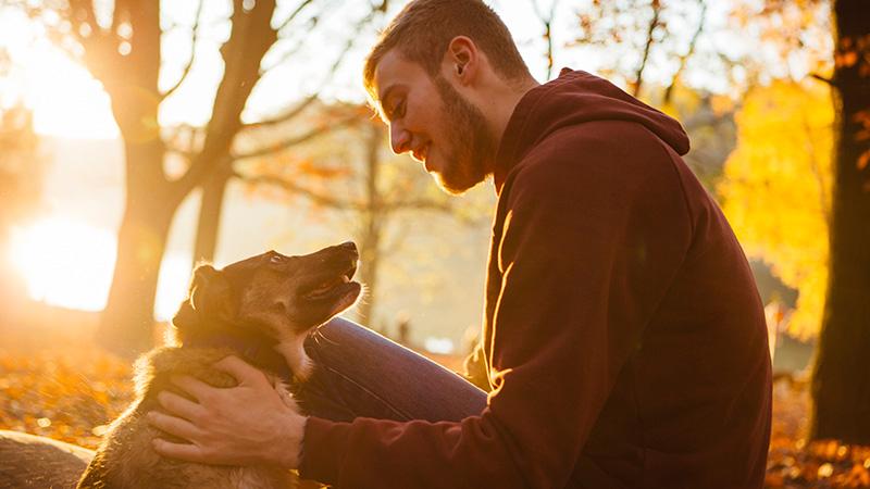La ciencia detrás de cómo los perros ven el mundo los Pepinillos 2
