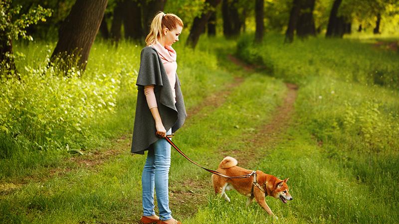 La ciencia detrás de cómo los perros ven el mundo los Pepinillos 1
