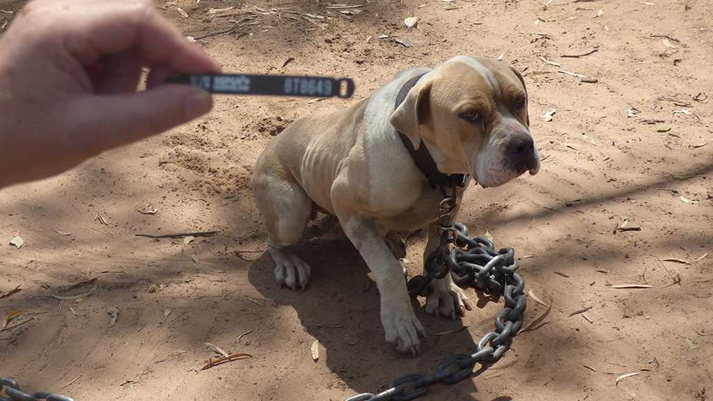 Authorities seized 81 dogs and puppies, as well as 10 cats, from the farm. (AAP)