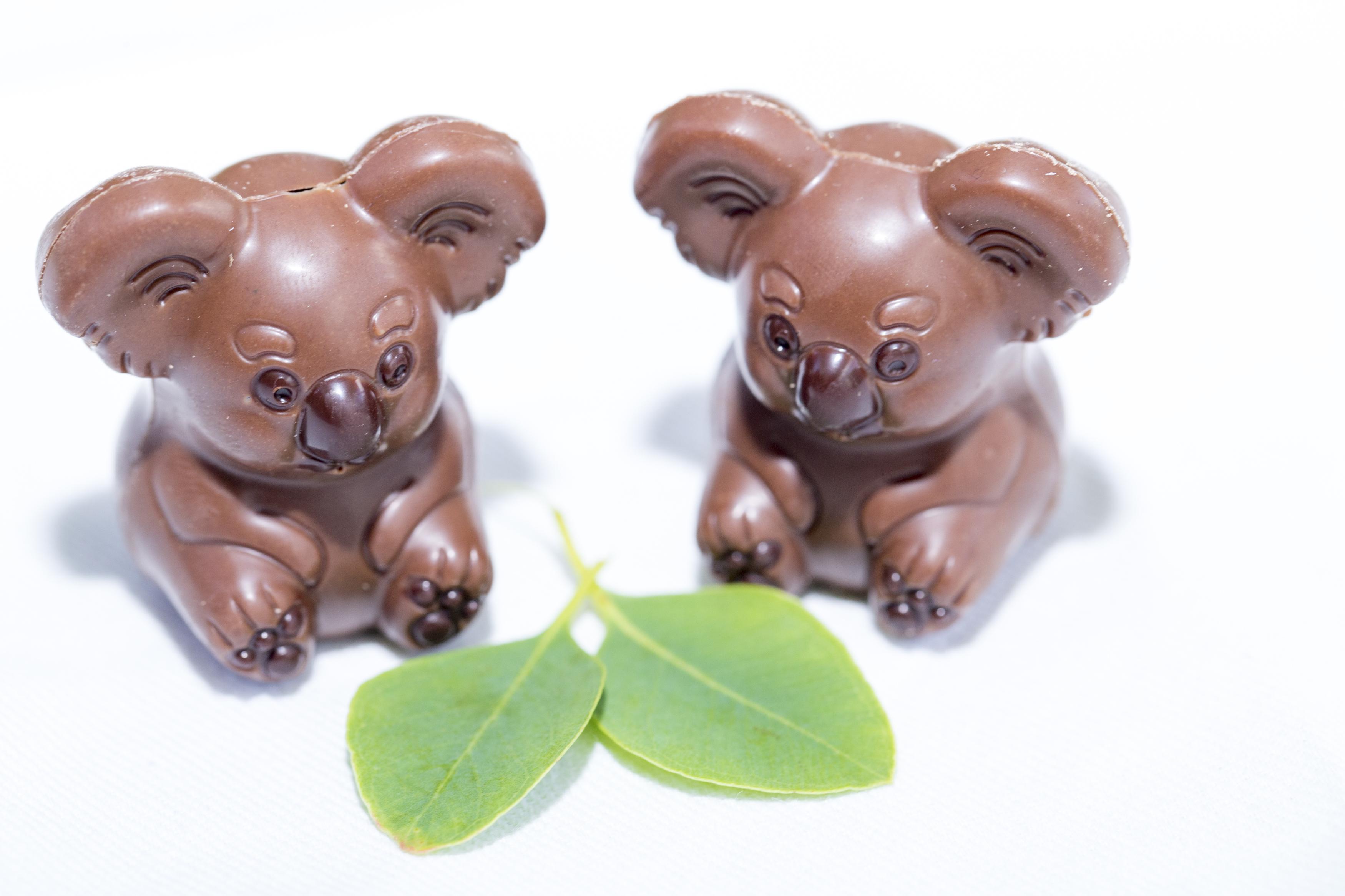 Wild Life Sydney Zoo and Oh! Boo koala chocolates
