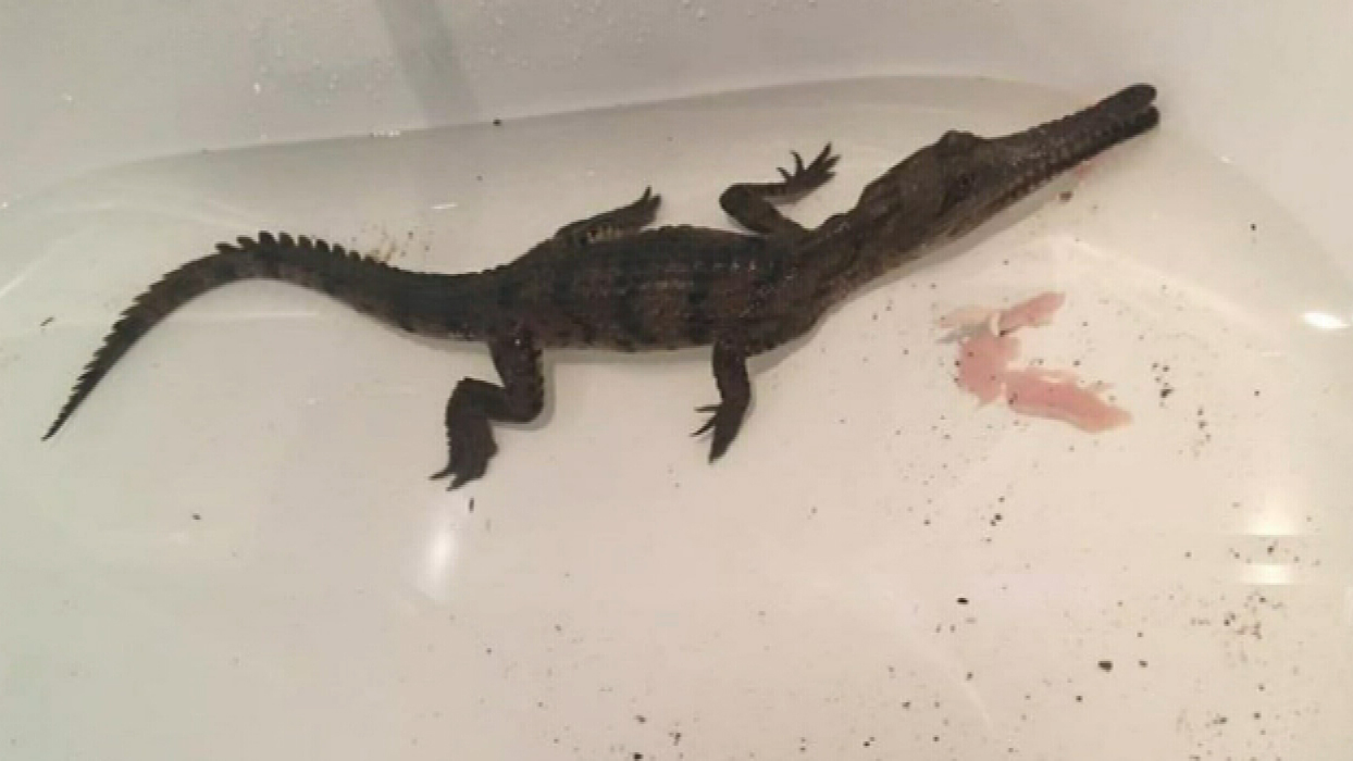 "Mr Hughes said the croc didn't move ""too quickly."" (9NEWS)"