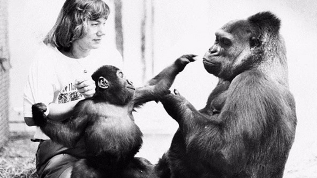 Mzuri with his mother Yuska and keeper Uli Weiher, Melbourne Zoo, 1984. (Melbourne Zoo)