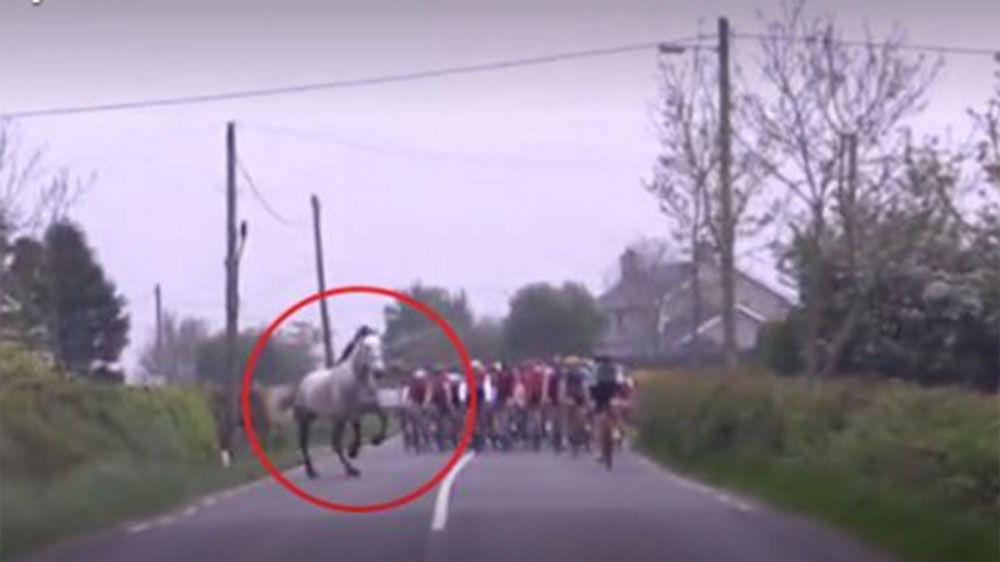 Horse jumps a fence and nearly collides with cyclists