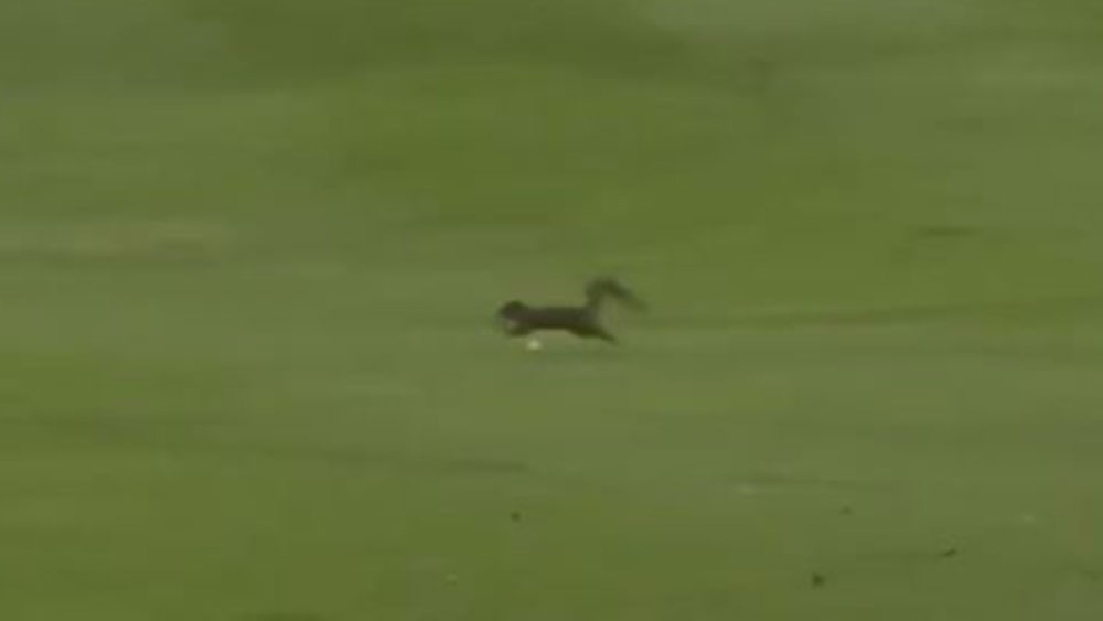 Sergio Garcia nearly cleaned up a squirrel at the Byron Nelson Classic.
