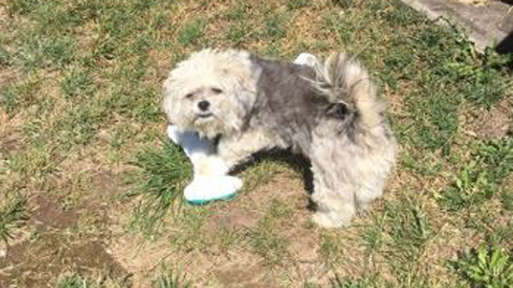 The Wright family's dog Marley was cruelly killed by a stranger. (Supplied)