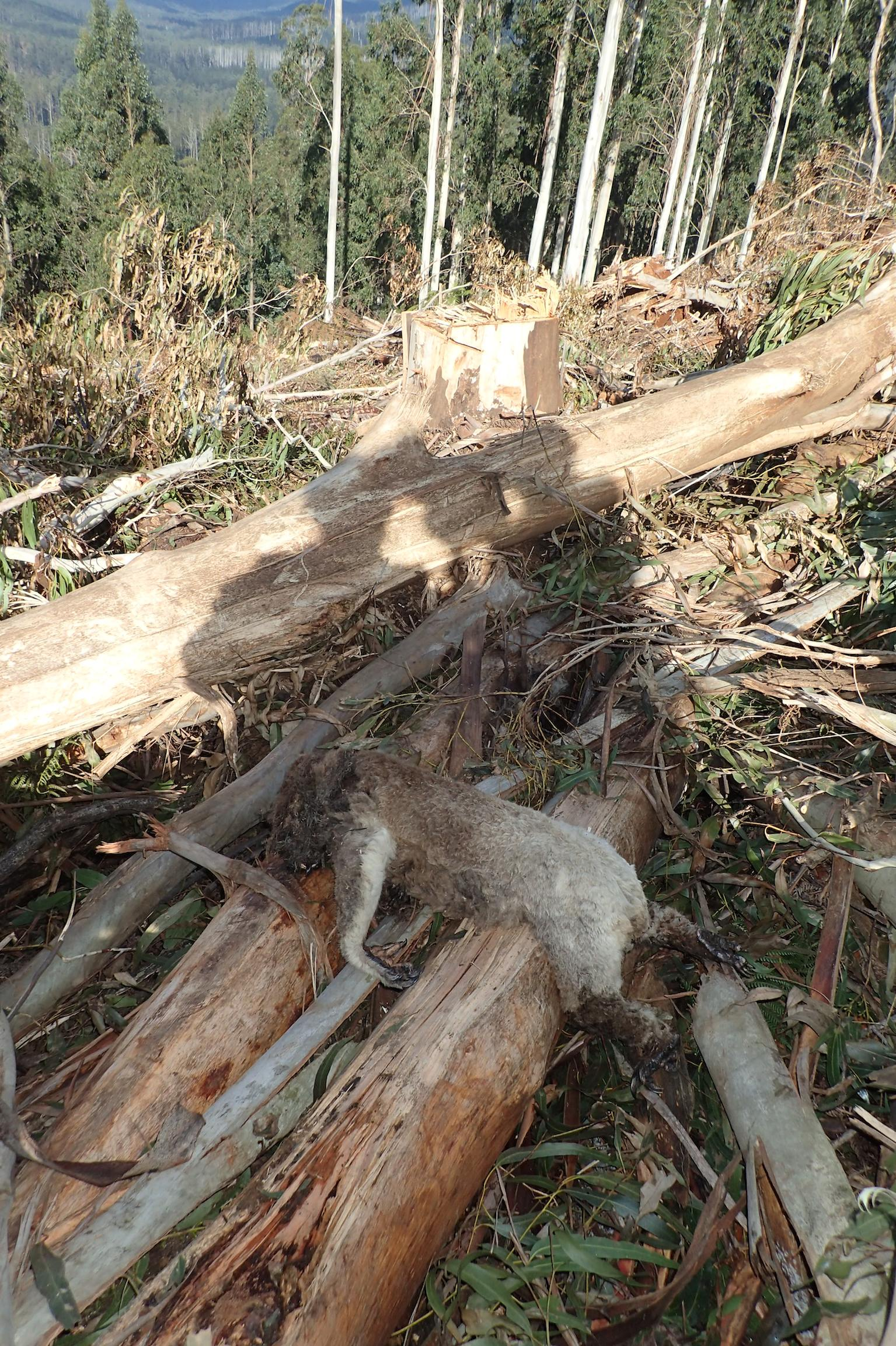 Logging in the area is reportedly ongoing. (Supplied)