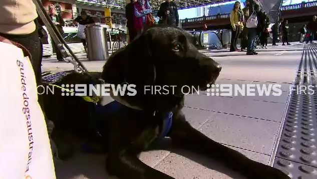 Ms Hales says it's not the first time her guide dog has been refused into a taxi. (9NEWS)