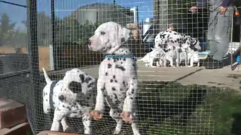 Each of the pups weigh a little over three kilograms. (9NEWS)
