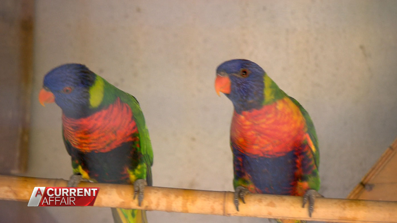 Mr Jones has bred birds for more than 40 years.