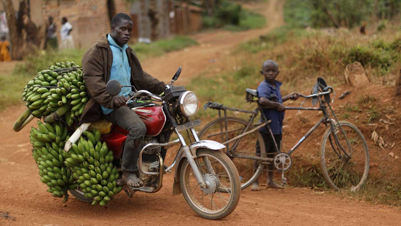 A Ugandan man taking a bunch of bananas to market. (AAP)