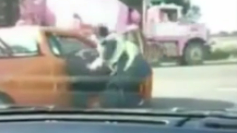 The police man then dragged the driver from the ute. (9NEWS)