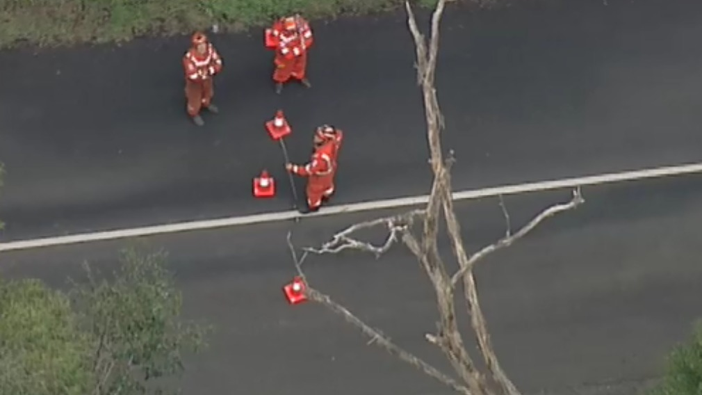 Ferrari Car Crash Cockatoo