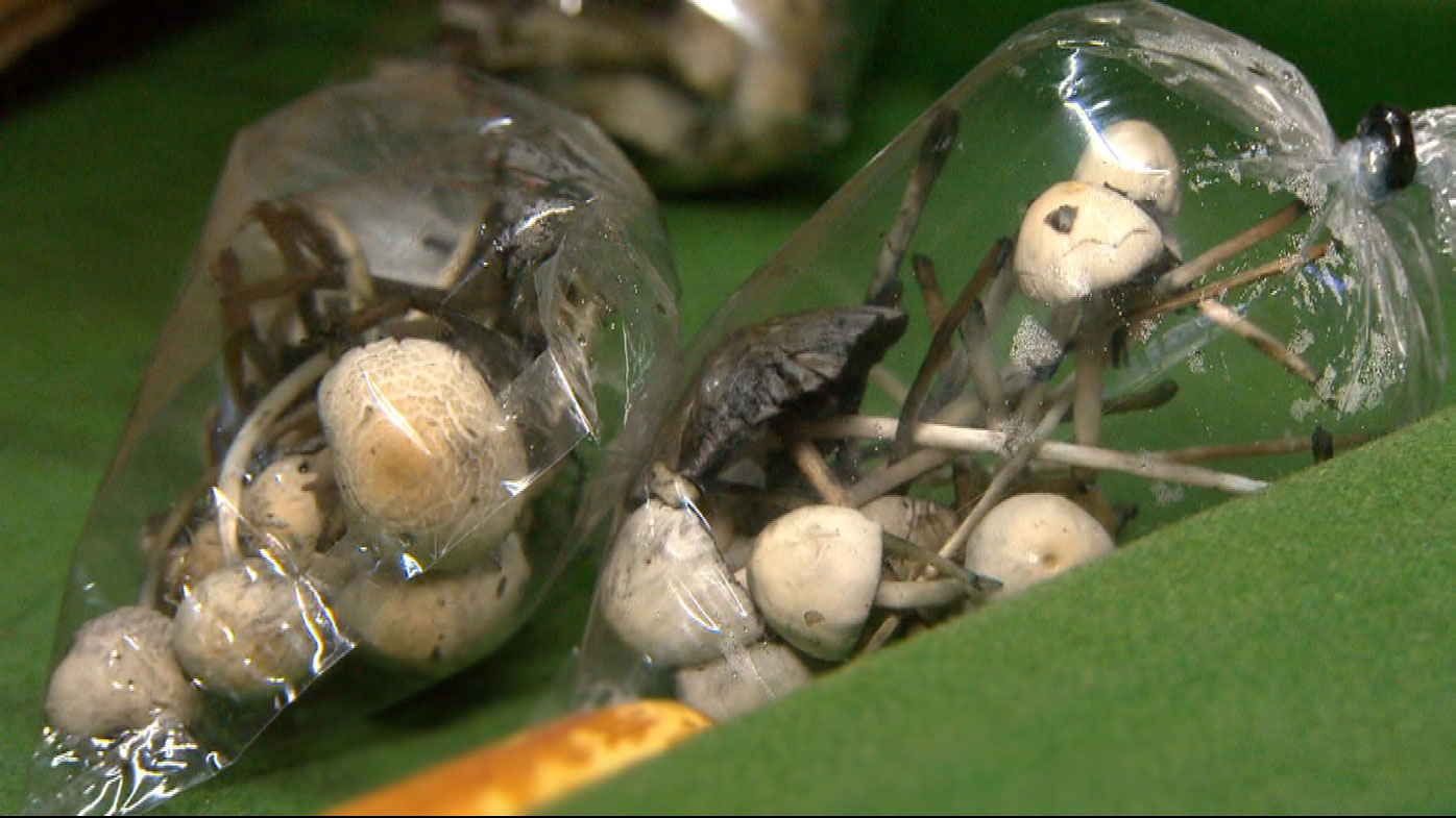 Drugs such as magic mushrooms are reportedly rife in Bali.