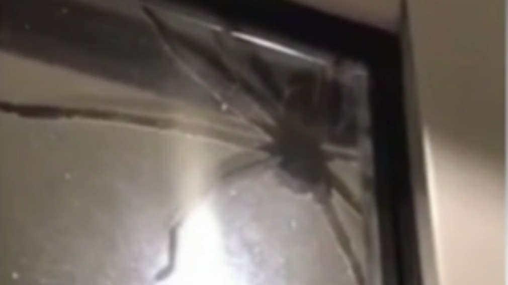 The eight-legged freak terrifed Ms Ansell and hundreds of social media users. (Supplied)