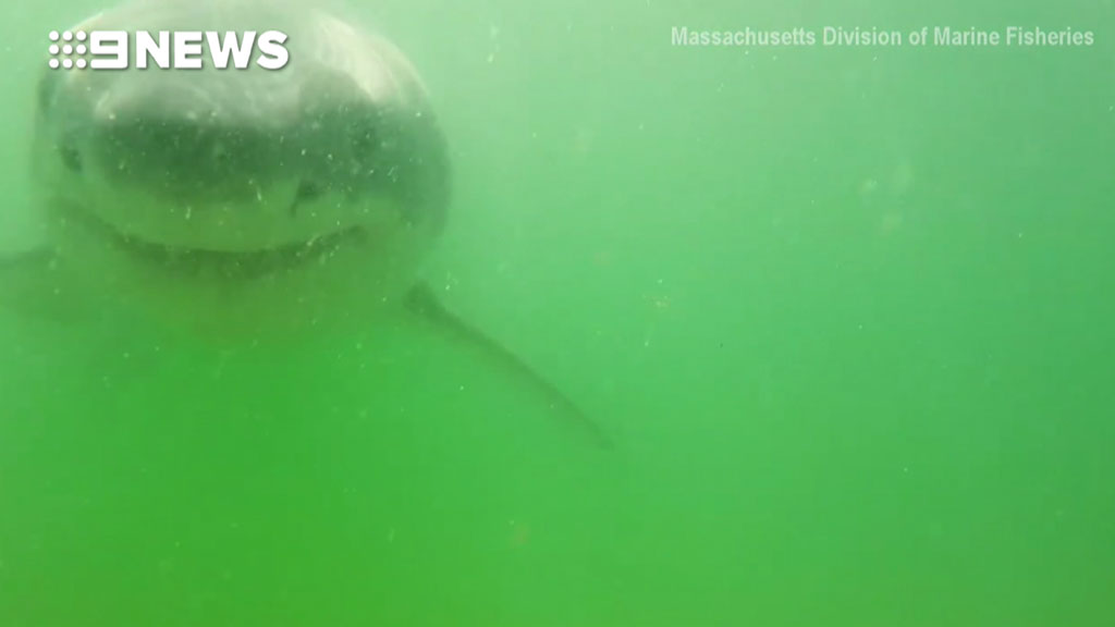 Great white shark chomps on underwater video camera