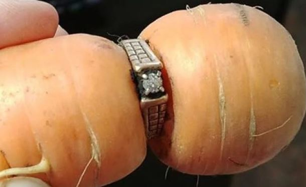 Gardener's lost engagement ring turns up on a carrot... 13 years later