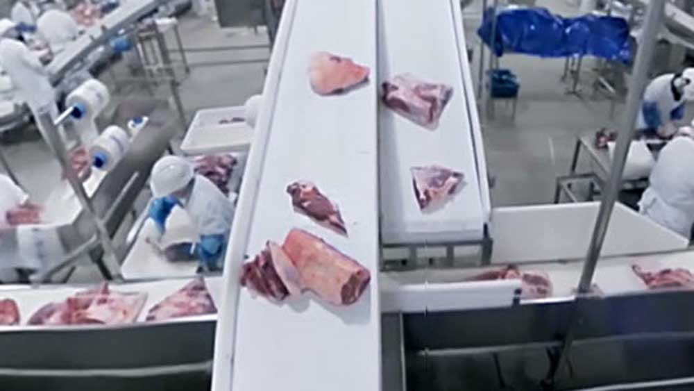 Beef Australia's virtual tour of paddock to plate