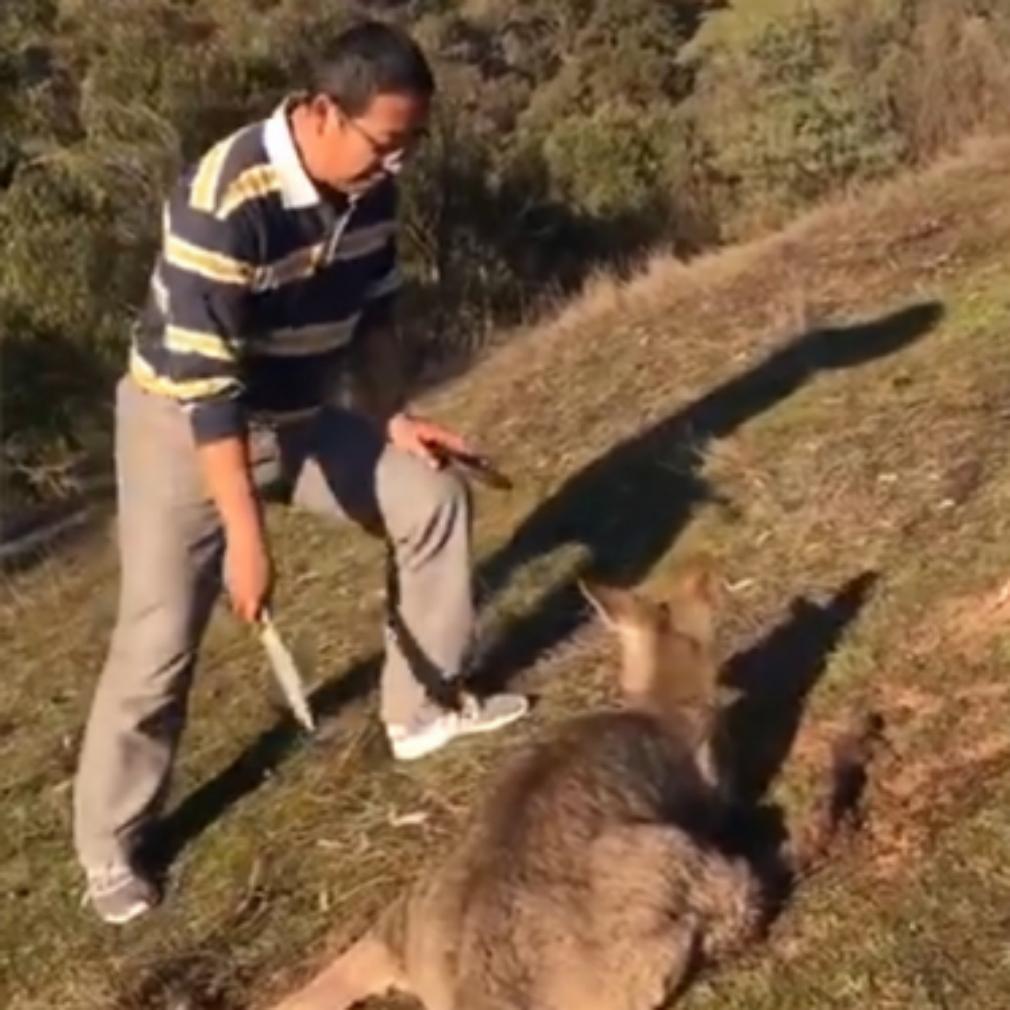 Kangaroo killing prompts investigation by animal charity
