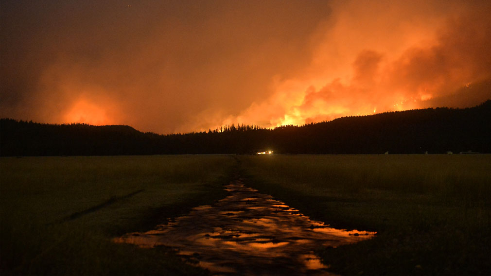 Fire burns in the Lolo National Forest in Montanta. (Associated Press)