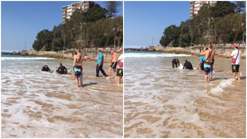 Fluffy the shark is released back out to sea from Sydney beach