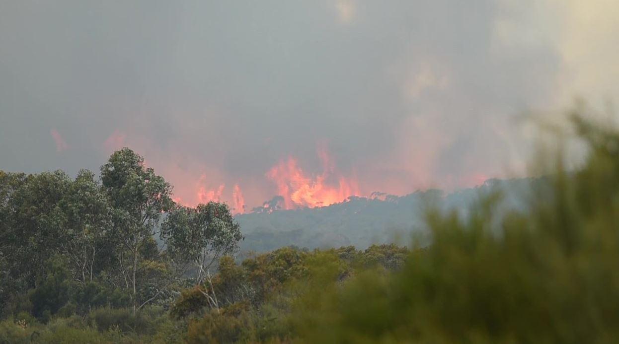 9NEWS cameraman Jayden Webster has captured fire crews working to control the Jervis Bay blaze. (Twitter)