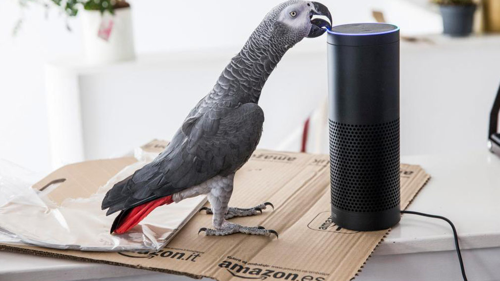 Buddy the parrot ordered a set of gift boxes for his owner after mimicking her voice. (The Sun)