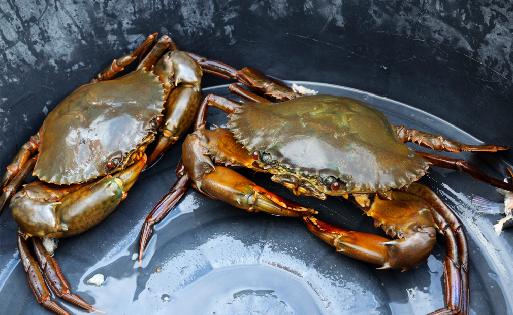 Queensland bomb squad uncovers pot of crabs