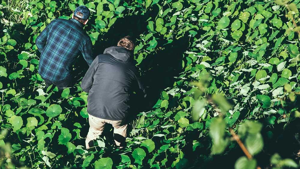 Electrolux ambassadors James Viles and Scott Bridger forage for food. Image: Supplied