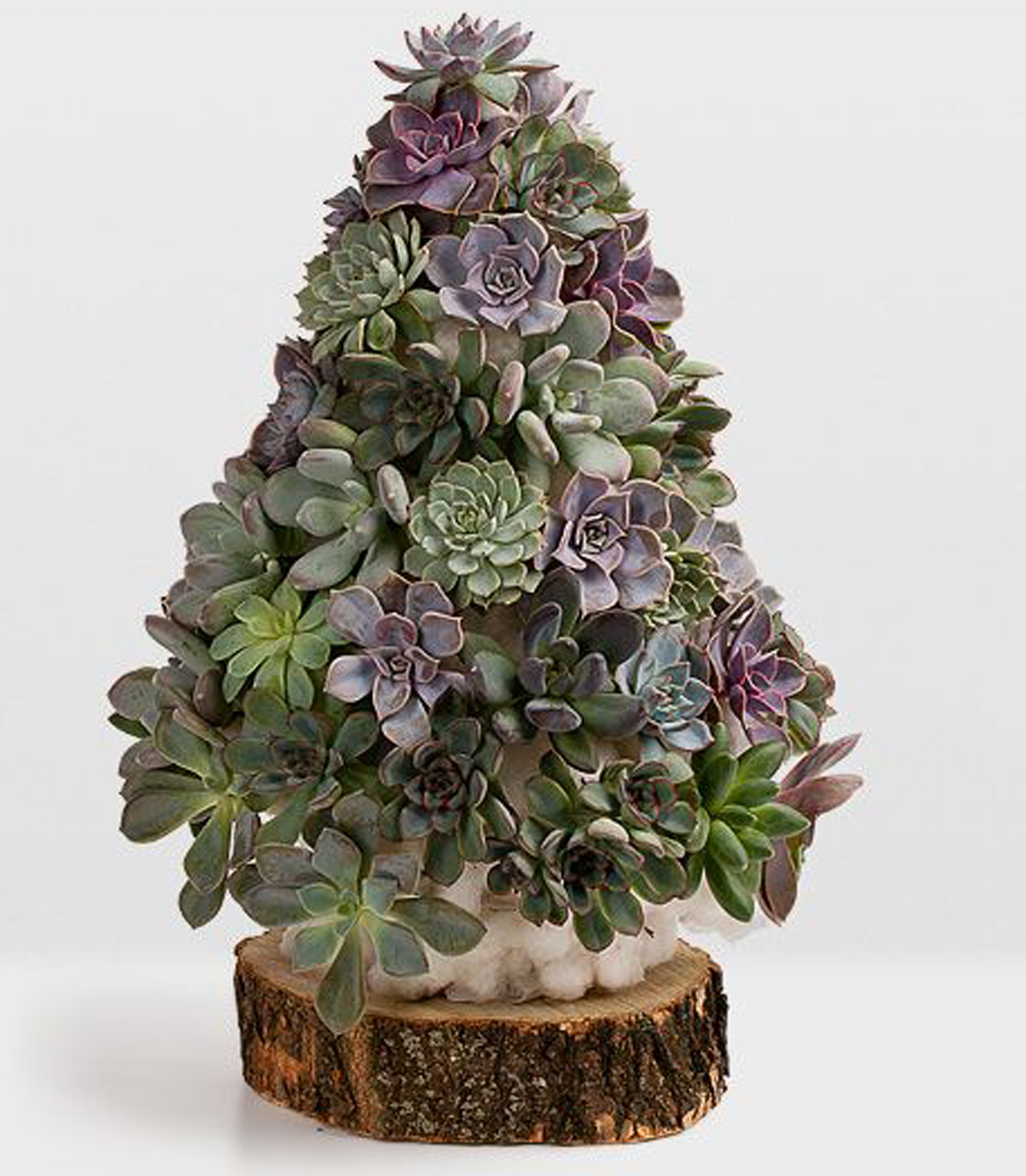 How To Make A Mini Succulent Christmas Tree 9homes