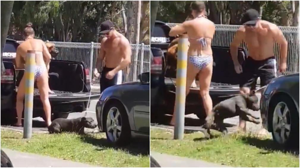Man violently kicks dog while woman watches on  - 9News