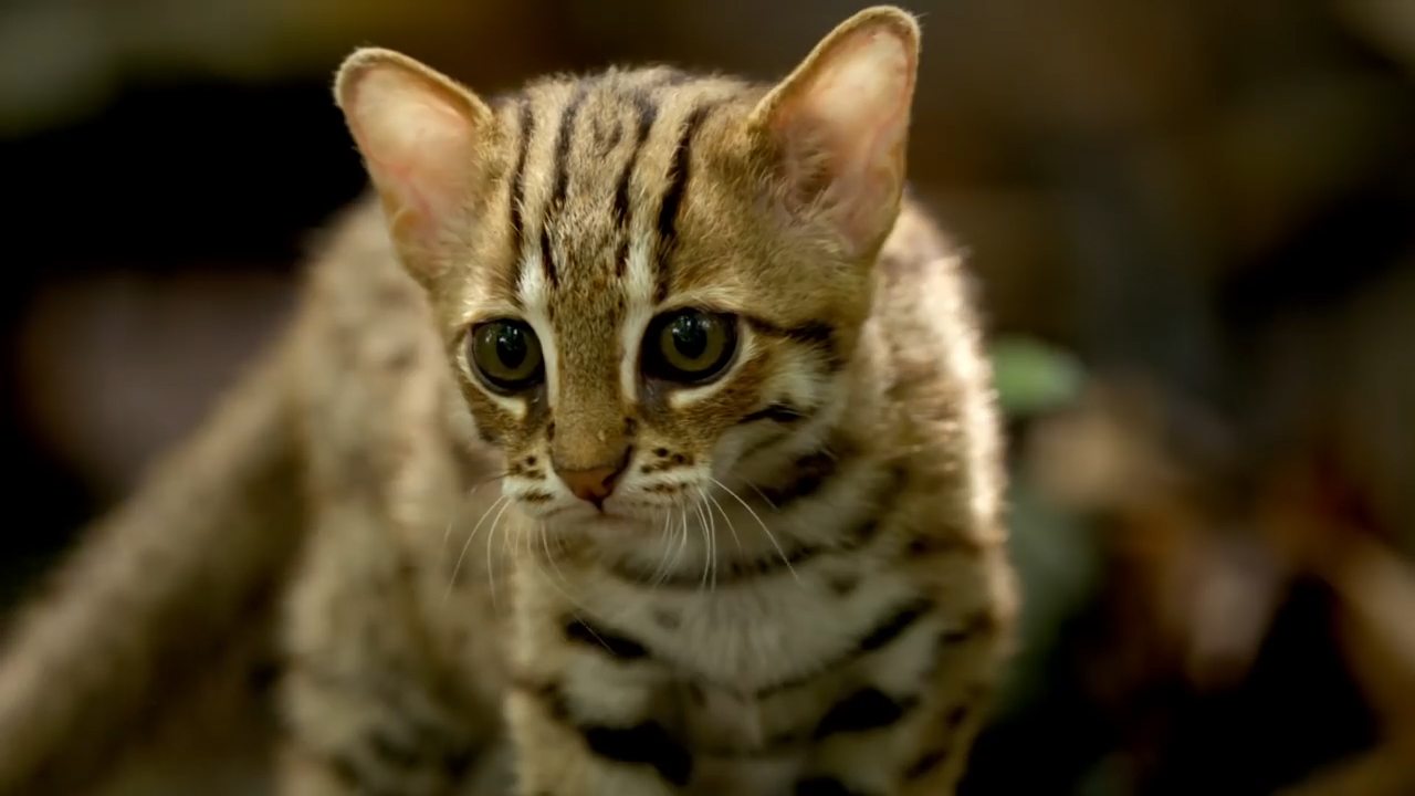 The smallest cat in the world - who is she 93
