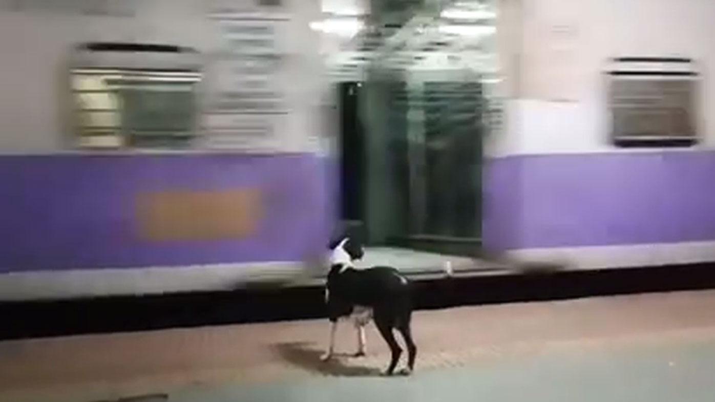House Train A Stray Cat