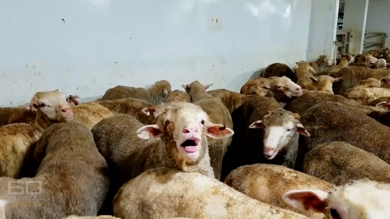Live sheep exports: Government introduces a raft of changes
