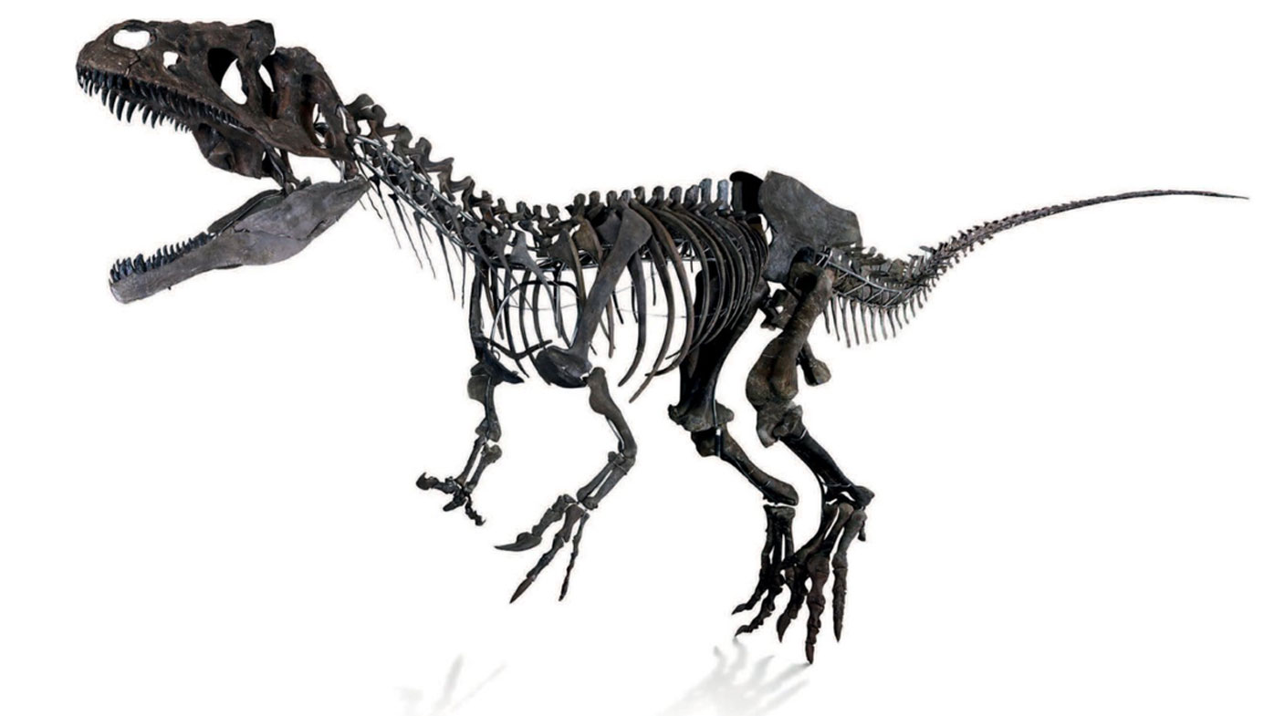 "The bones of a ""new species"" of dinosaur have sold for more than $3 million at an auction at the Eiffel Tower in Paris."