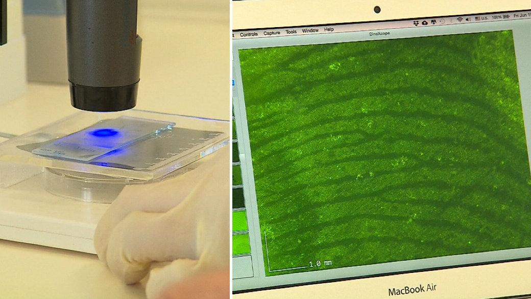 Stunning DNA breakthrough could help crack cold cases
