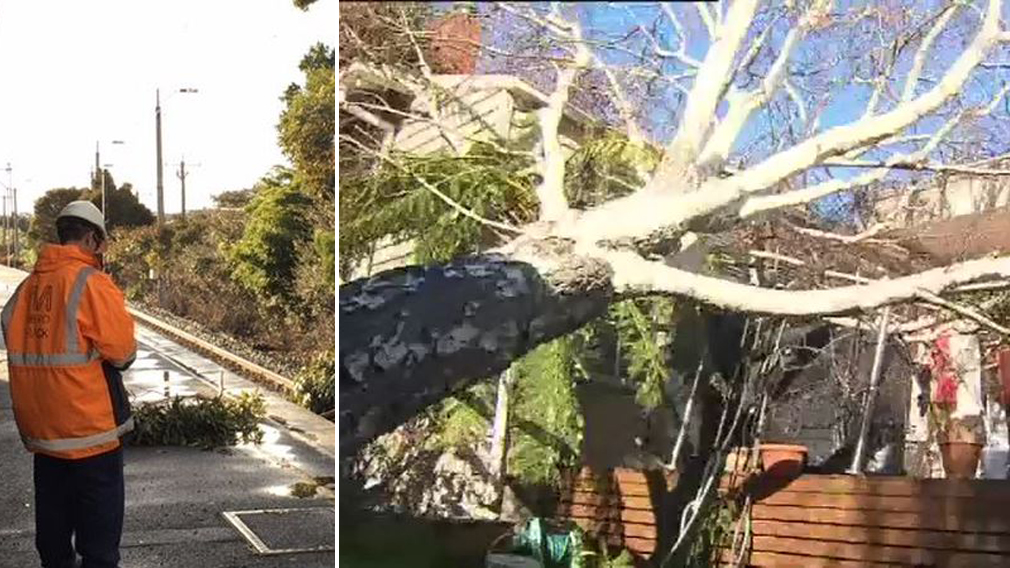 Victoria cleaning up trail of destruction after wild winds and intense storms