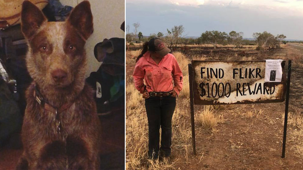 WA hunt for 'best mate' Flik stolen and dumped 400km away