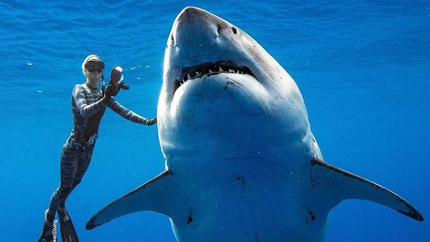 Incredible encounter with world's biggest great white shark