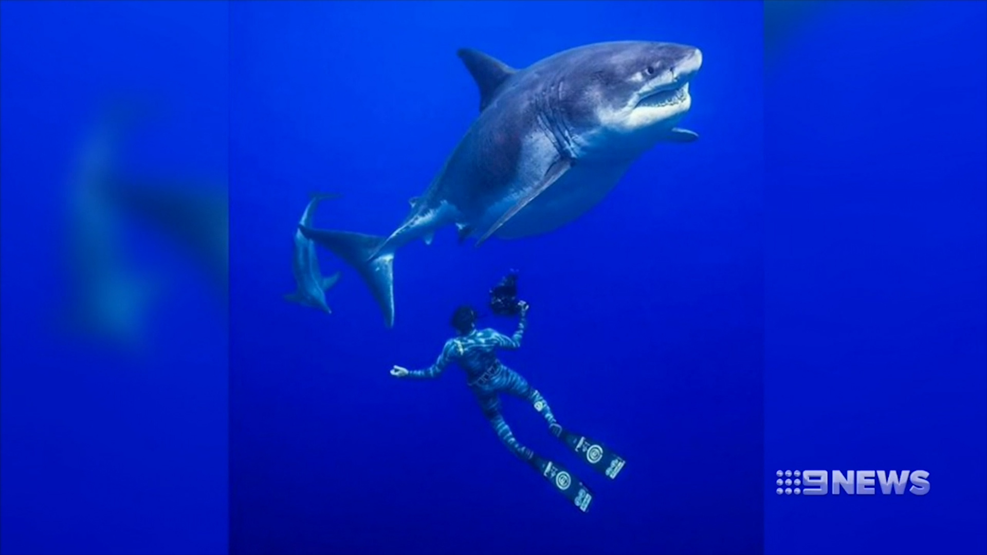 Deep Blue shark: Ocean Ramsey films incredible encounter